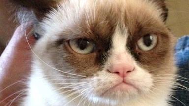 Il Gatto Arrabbiato Grumpy Cat Protagonista Di Un Telefilm